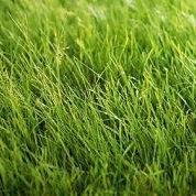 posečená tráva